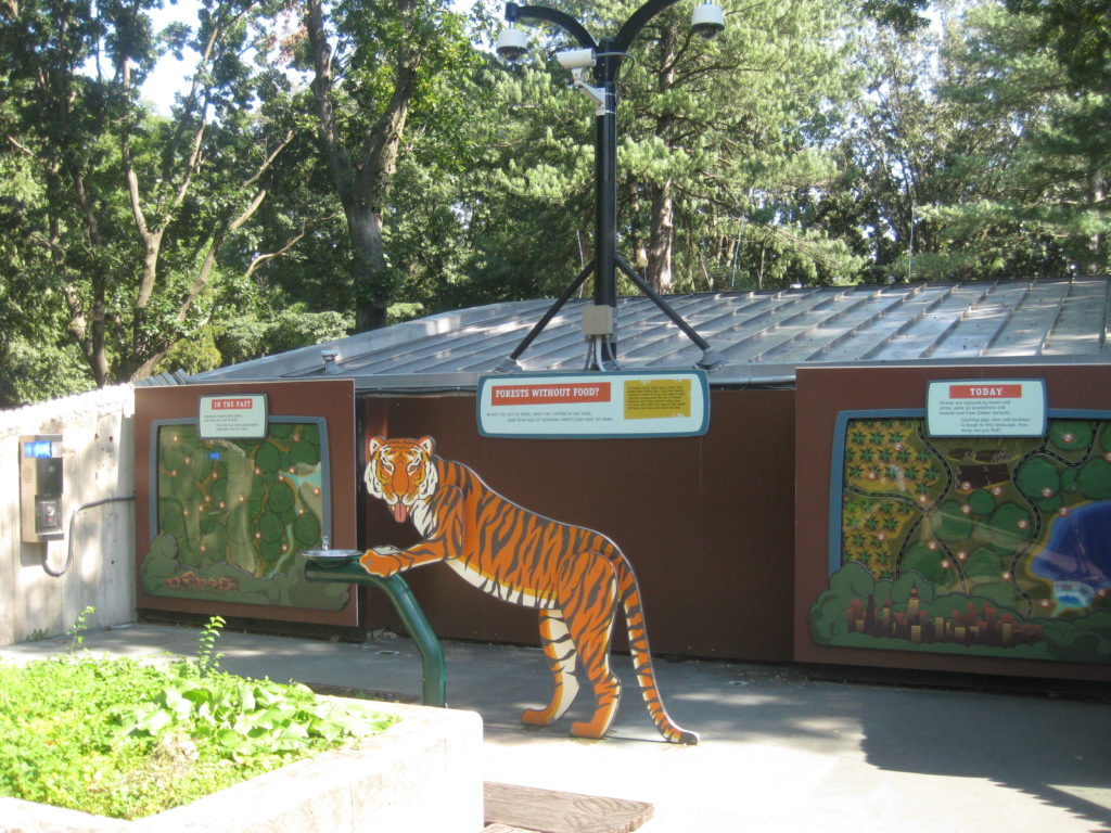 National_Zoo_Tiger