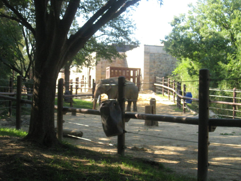 Washington_DC_Zoo_Elephant