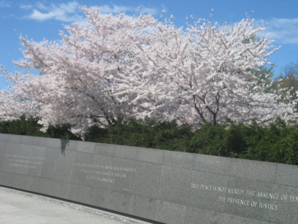 cherry blossoms martin luther king memorial 1024x768 - Washington D.C. and Cherry Blossoms 2019