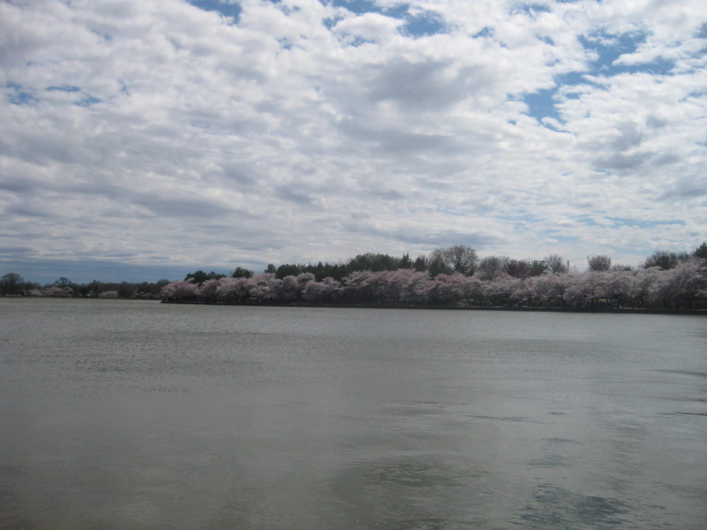 cherry blossoms tidal basin waterfront 1024x768 - Washington D.C. and Cherry Blossoms 2019