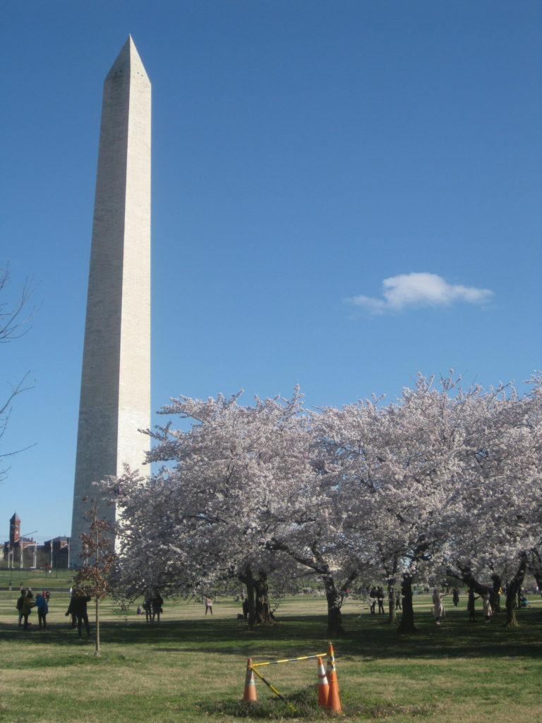 washington_monument_cherry_blossoms_dc