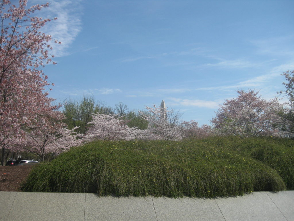 cherry blossom washington monument tip 1024x768 - Washington D.C., Cherry Blossoms, and National Museum of African Art April 2019