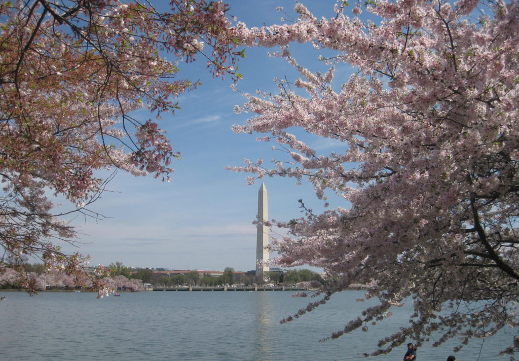 tidal basin cherry blossom washington monument 1024x712 - Washington D.C., Cherry Blossoms, and National Museum of African Art April 2019