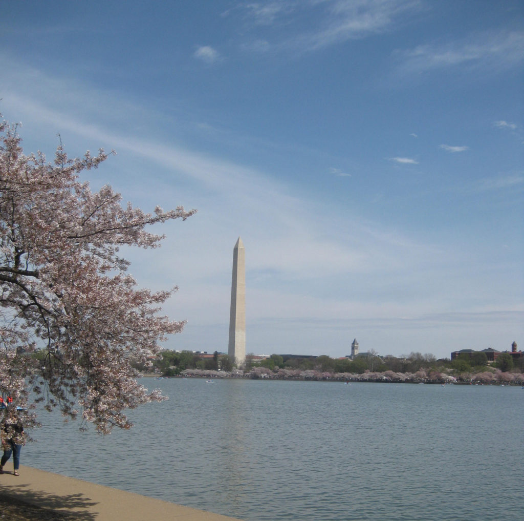 washington monument cherry blossom tidal basin 1024x1017 - Washington D.C., Cherry Blossoms, and National Museum of African Art April 2019